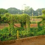Topiary in Hanging Grardens