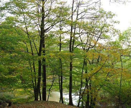 A glint of autumn