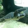 Snouty Turtle