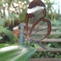 Translucent Tropical Butterfly