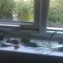 Lots of New Succulents!