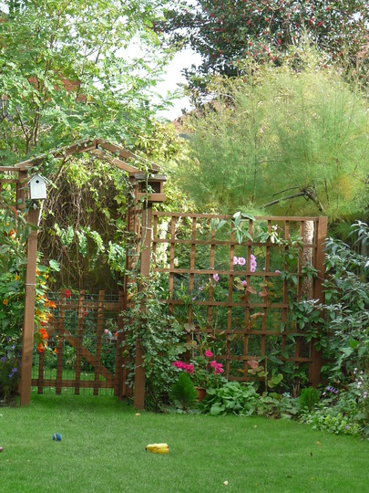 Down the garden today (Clematis armandii)