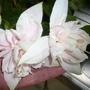 Pink Marshmellow Fuschia