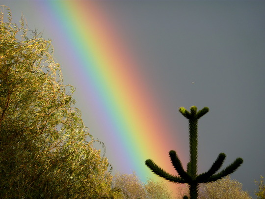 What A Rainbow!