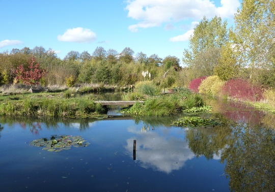 Lots of Autumn Colour Around Pond