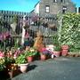 My garden this year 2011