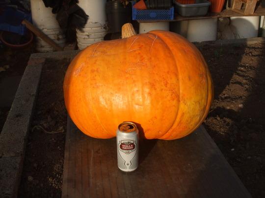 70 lb pumpkin