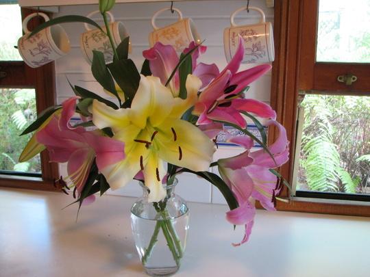 Mid-Spring Downunder - Oriental Lily blooms. (Oriental Lilium)