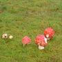 2011 Fungi