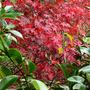 More_autumn_017