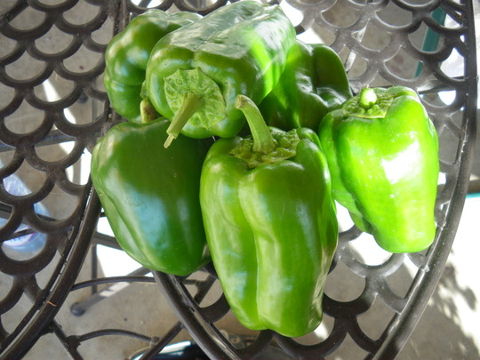 Peppers still going