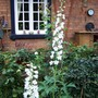 Delphinium - how about this - last day of October and two delphiniums flowering still.
