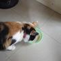 'Sweetie' and her Porridge