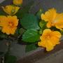 Yard_pics_11_1_11_17_