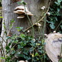 Fungi_tree_4