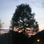 sky through tree