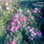 Allotment_godetias_azalea_flowered_at_top_of_plot_22_10_2011
