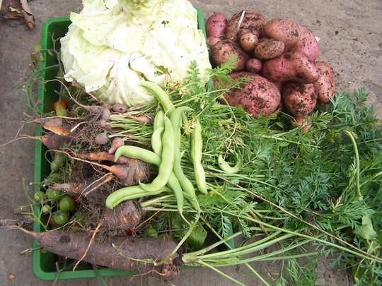Final Weekly Harvest