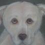 Ams dog