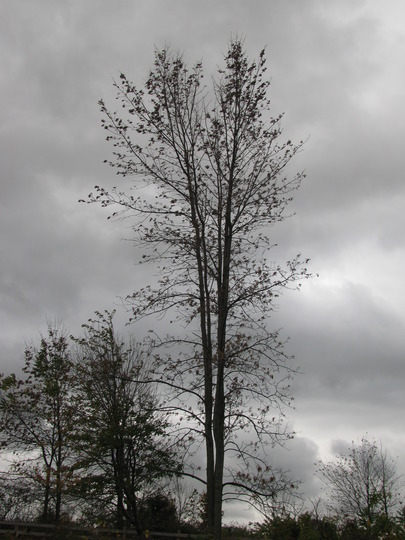 A gray day