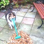 Conker_raking_leaves._10_nov._2011
