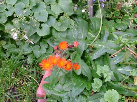 Wildflower near Pond