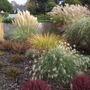 Grass & Heather Garden At Foxhollow