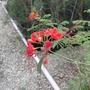 Nice Flower At a Garden