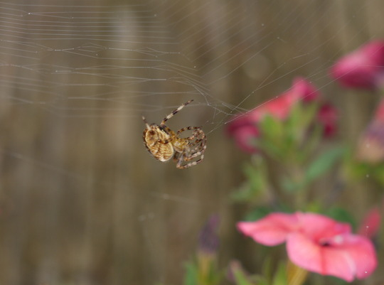 Spider Spinning