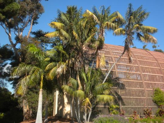 Royal Palms (Roystonea regia) and Kentia Palms (Howea fosteriana) (Royal Palms (Roystonea regia) and Kentia Palms (Howea fosteriana))