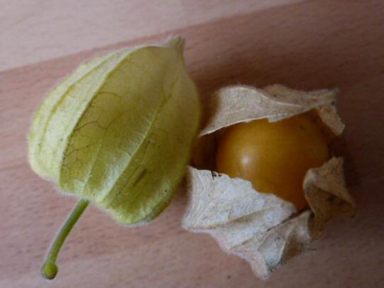 Cape Gooseberry  ' Edible Physalis '