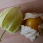 Edible_cape_gooseberry_1