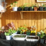 Our Sun Room/Greenhouse/Overwintering Room 1
