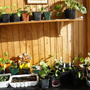Our Sun Room/Greenhouse/Overwintering 2