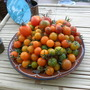 still plenty of tomatoes in our greenhouse (in Flanders, Belgium)  - 211111