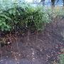 Planting Hawthorn Hedge Continuation