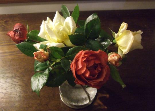 Vase of roses (Rosa)