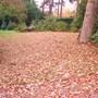 Leaves_005