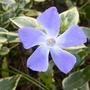 Garden_412