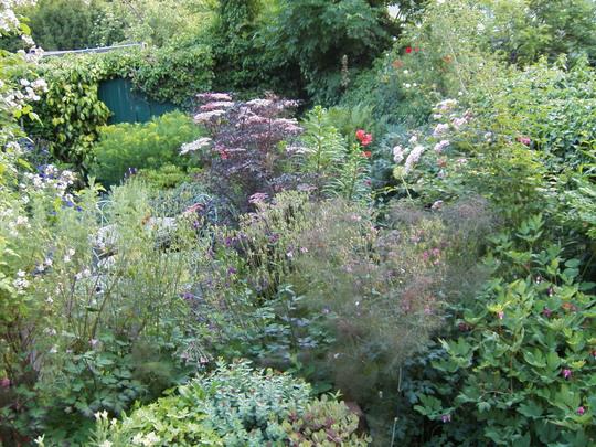 More Back Garden