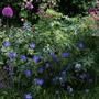 Back Garden 2011