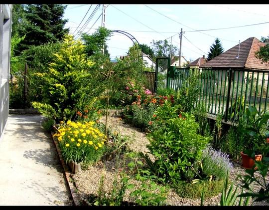 part of front garden in June