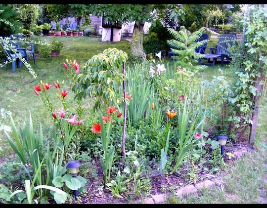 View across back garden in July