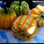Squash harvested in August