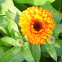 December 3rd Still flowering