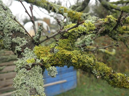Like abita Lichens?