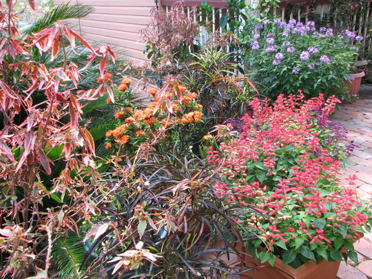 Early Summer in N.E. Downunder - Colour in the courtyard
