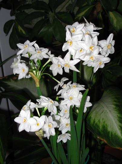 0 - 47 fpm! ~ flowers per month