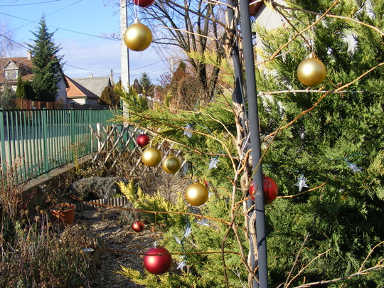 A few baubles and lights brighten up the front garden. It's St Nicholas day here in Hungary, celebrated a lot more than in UK.