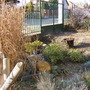 The stone garden is brightened up by the dwarf bamboo keeping it's colour in December.